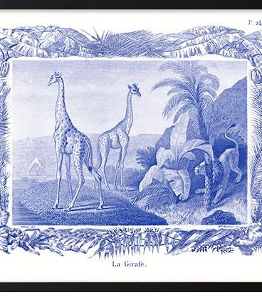 Lithographie gravure girafe animal - format A3