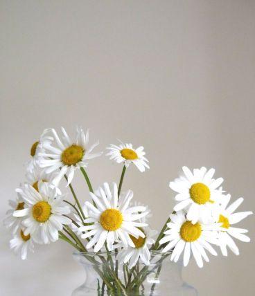 Vase en verre ou terrarium