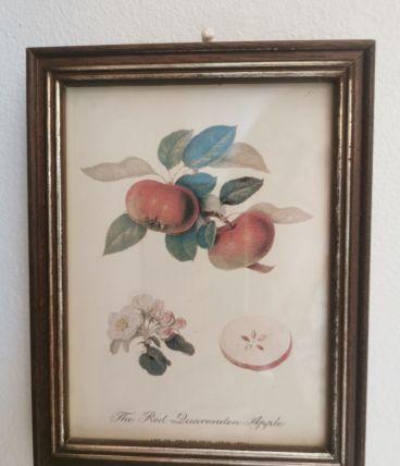 Petit cadre ancien botanique