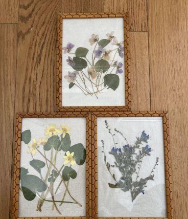 Cadres vintage fleurs séchées
